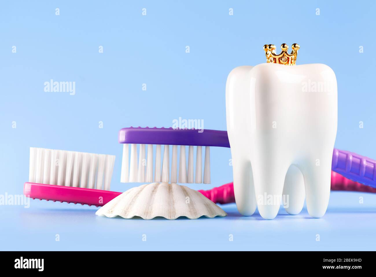 Dental Model And Toothbrushs On Blue Background Concept Image Of Dental Background Seashell Crown Dental Hygiene Banner With Copyspace Stock Photo 353237177 Alamy