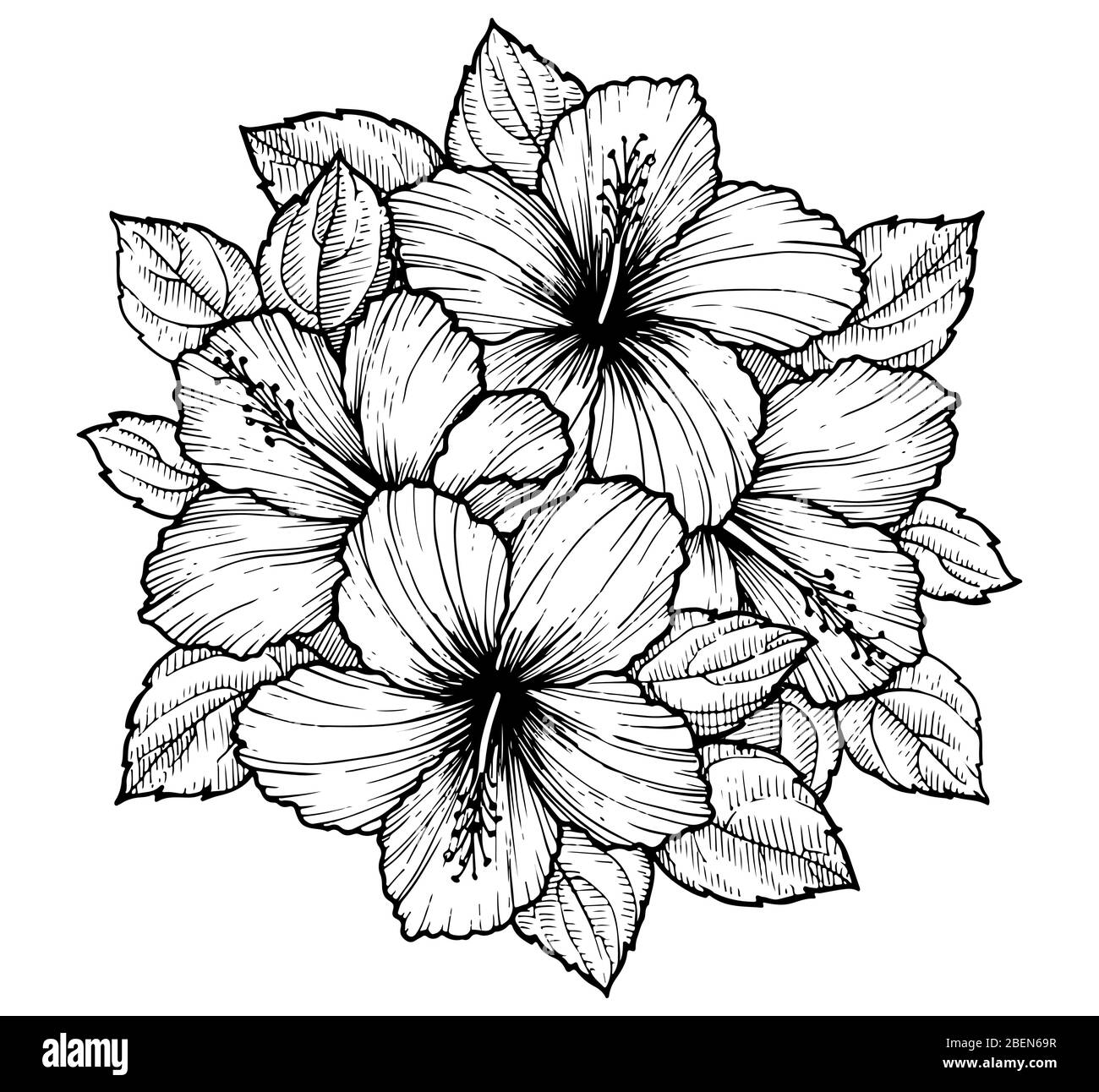 Hand Drawn Tropical Hibiscus Flower Bouquet With Leaves Sketch Florals On White Background Exotic Blooms Engraving Style For Textile Surface Desig Stock Vector Image Art Alamy