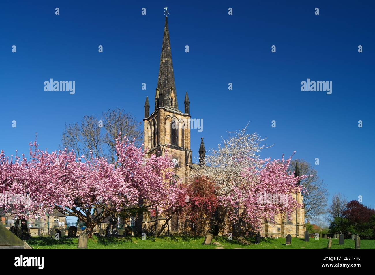 UK,South Yorkshire,Elsecar,Holy Trinity Parish Church in Spring with Cherry Blossom in full bloom Stock Photo