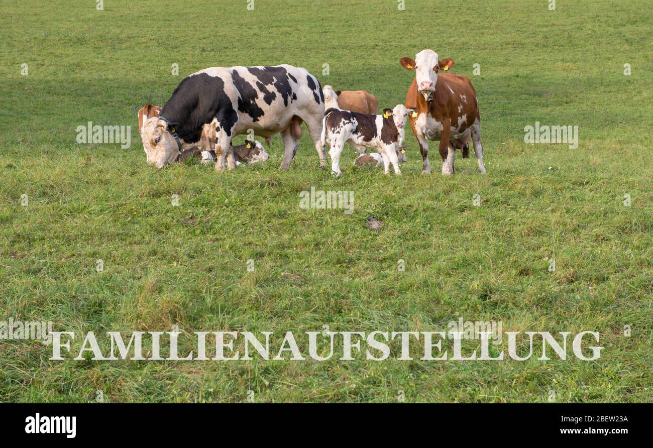 FAMILY CONSTELLATIONS . FAMILIENAUFSTELLUNG Stock Photo