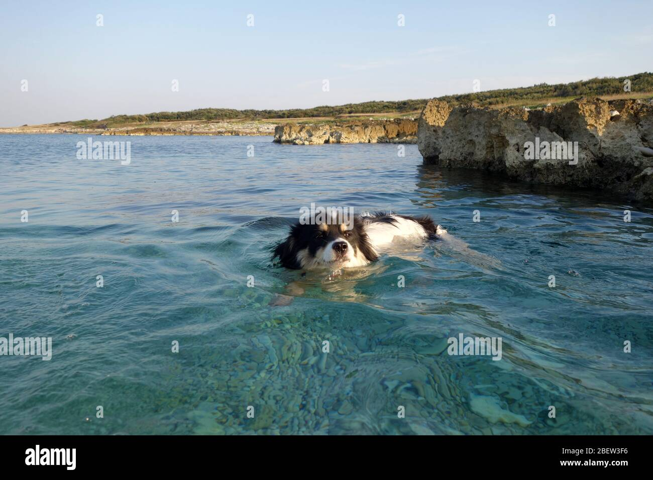 HUND AM MEER . DOG IN THE SEA Stock Photo