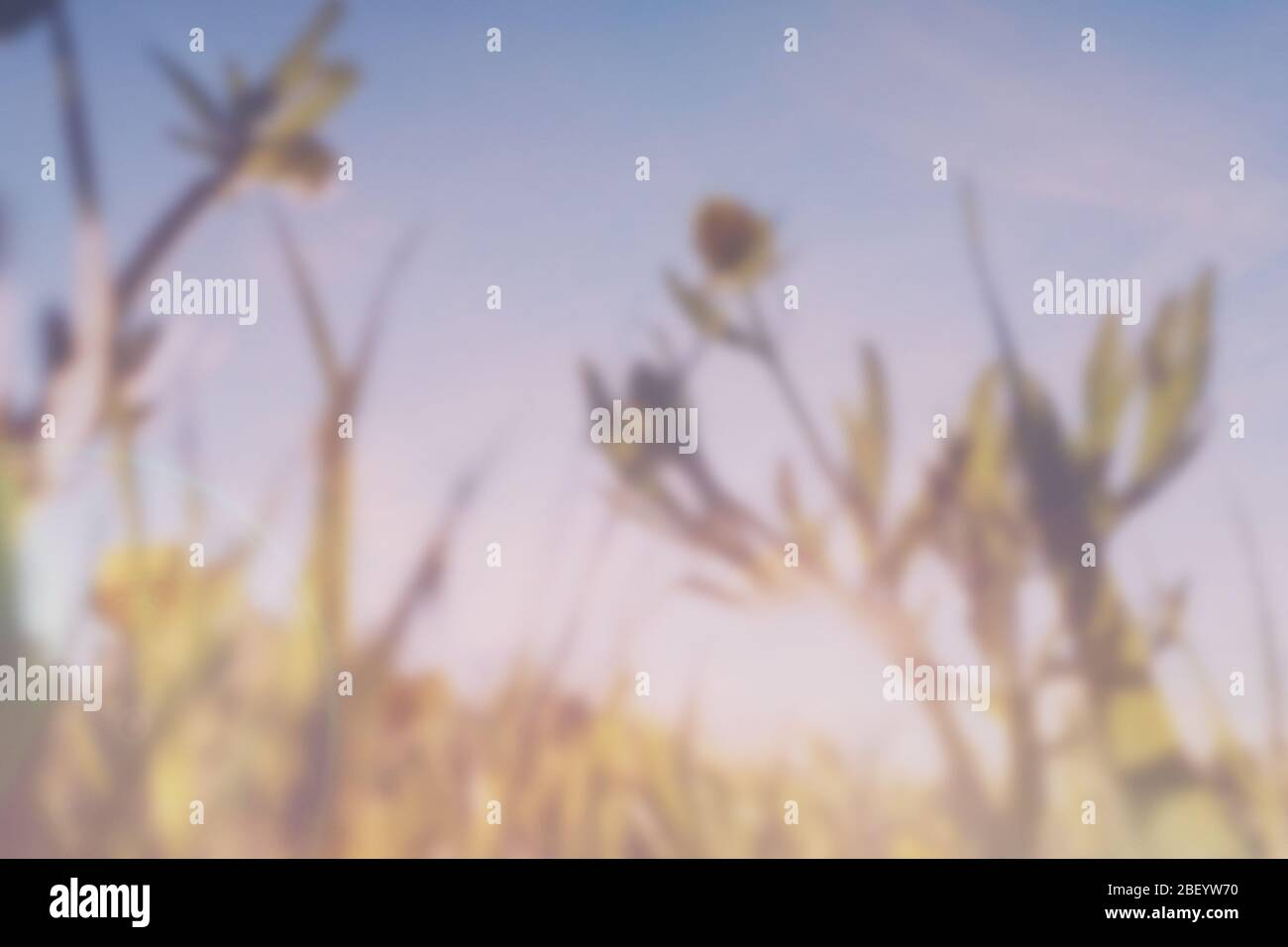A double exposure with vintage light leaks of a close up of blurred buttercups (Ranunculus) With an abstract, experimental dream like edit. Stock Photo