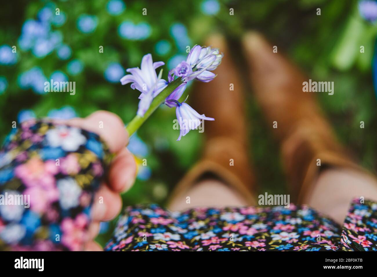 A girl or woman picking a bluebell on a spring day, wearing a floral dress and cowboy boots. Focus on the bluebell in hand. Shallow dof Stock Photo