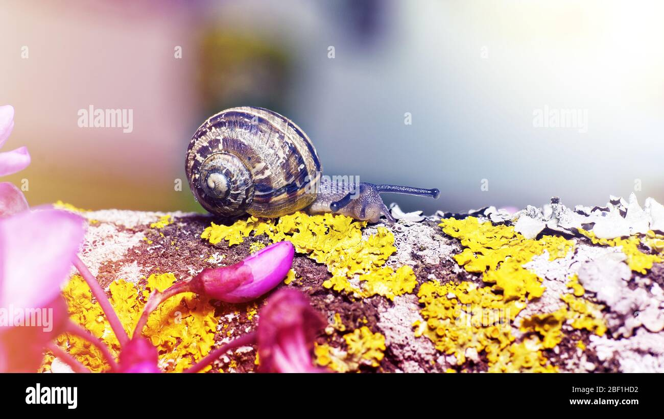 macro photo of a small snail on green moss with a blurred background in soft colors Stock Photo