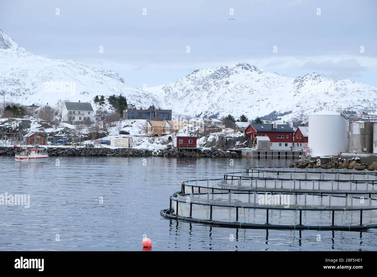 Fish farm belongs to cod liver oil factory.Quiet fishing village Ballstad, located in northern Norway.Fishing season traditionally starts every winter Stock Photo