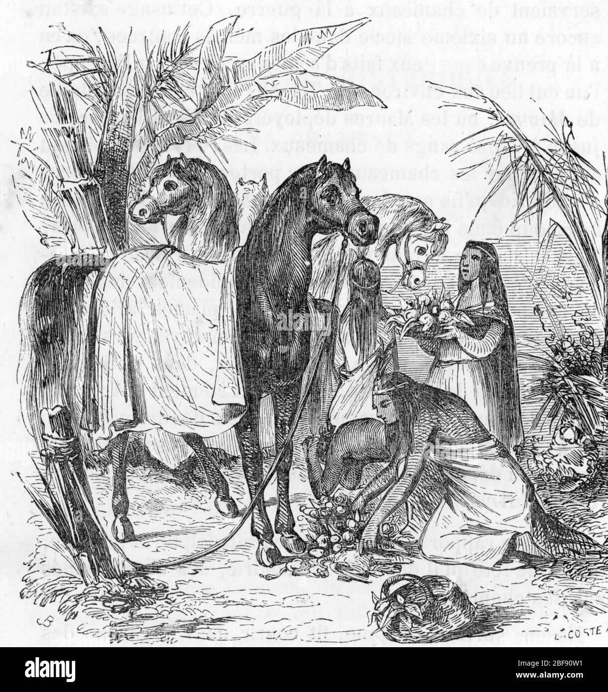 Bucephale le cheval d' Alexandre le Grand (356-323 av JC) recevant des offrandes (Bucephalus or Bucephalas the horse of Alexander the great) Gravure t Stock Photo