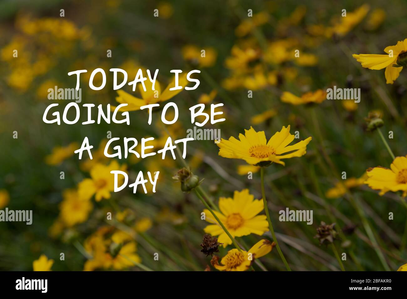 Yellow Flower Quotes High Resolution Stock Photography And Images Alamy