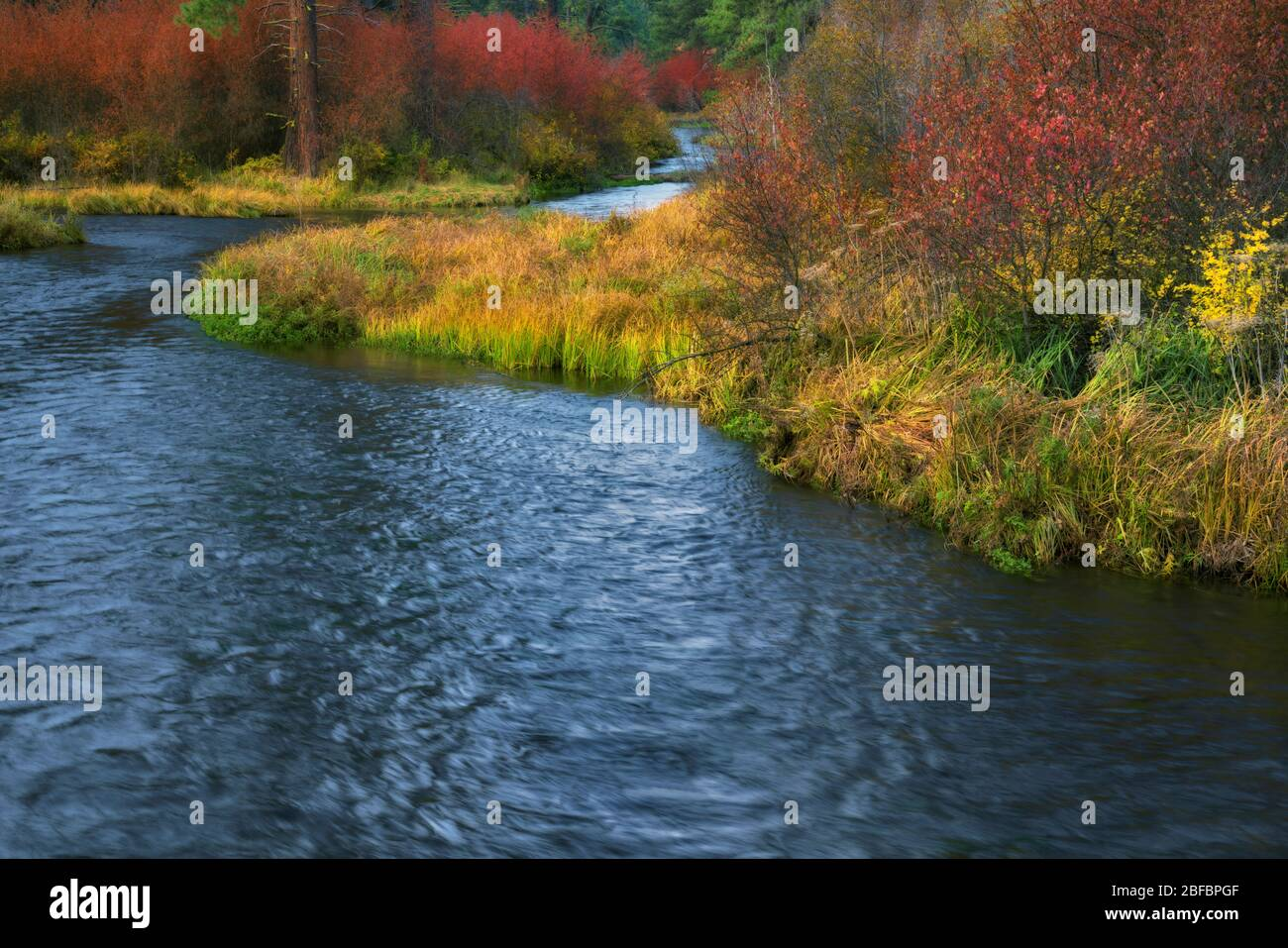 Vibrant autumn colors along the Wild & Scenic Metolius River near Camp Sherman in Central Oregon's Jefferson County. Stock Photo