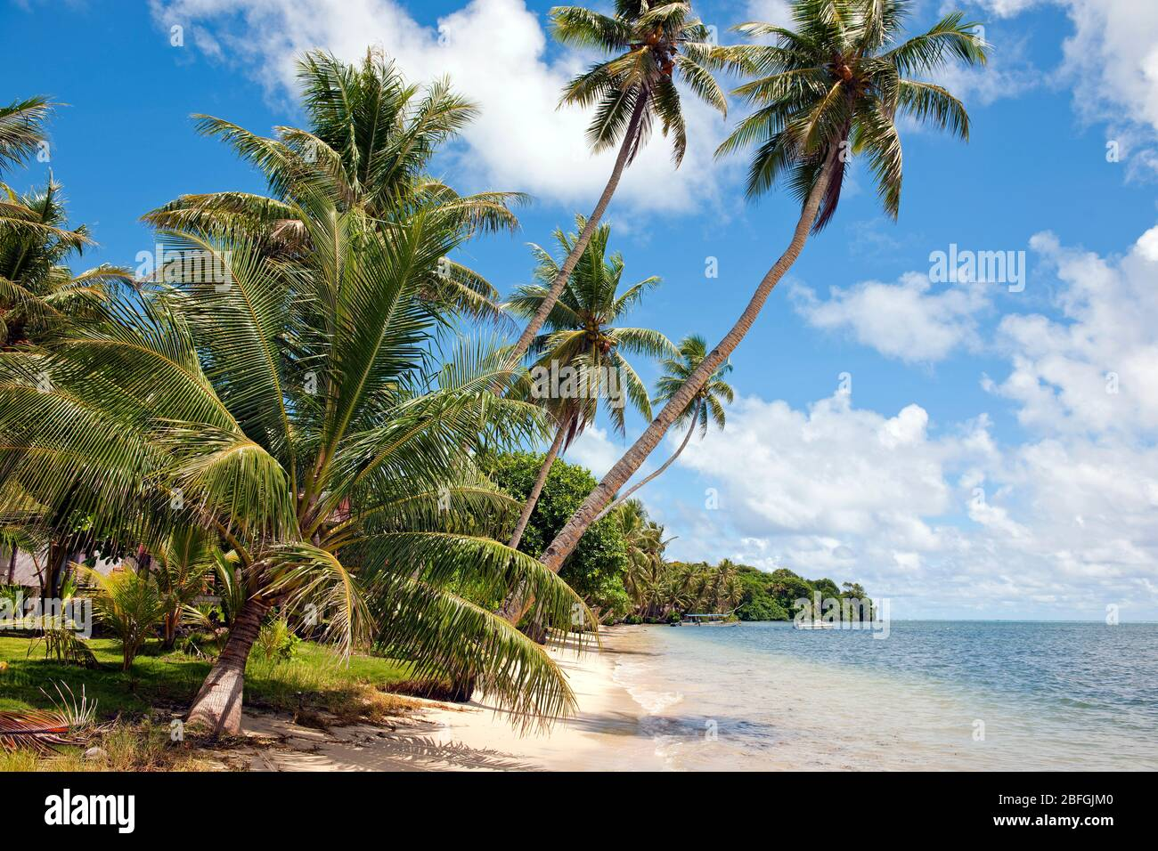 Palmenstrand in der Südsee, Pazifik Stock Photo