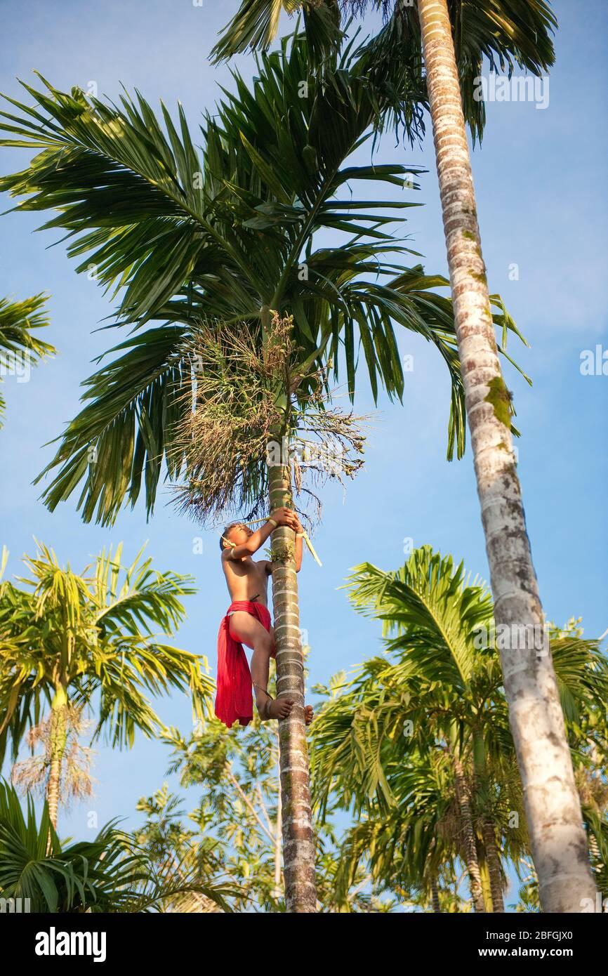 Junge klettert auf Kokospalme, Yap, Mikronesien, Südsee Stock Photo