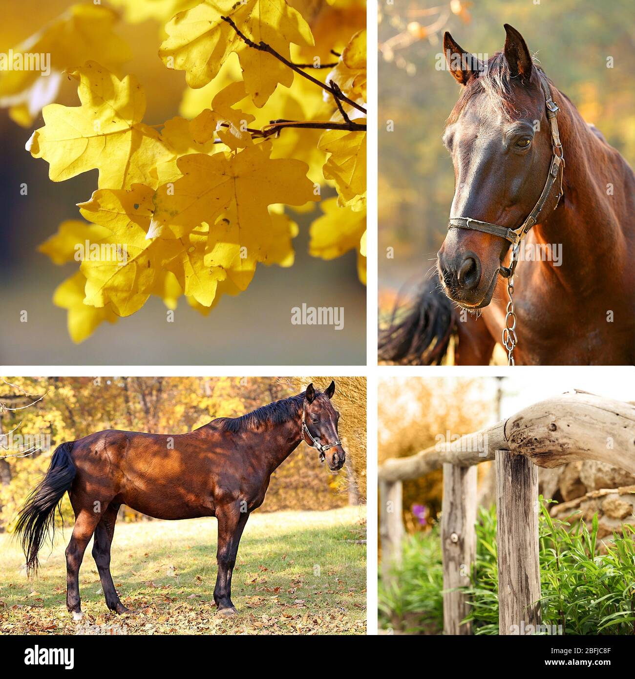 Collage Of Beautiful Brown Horse In Pasture Stock Photo Alamy