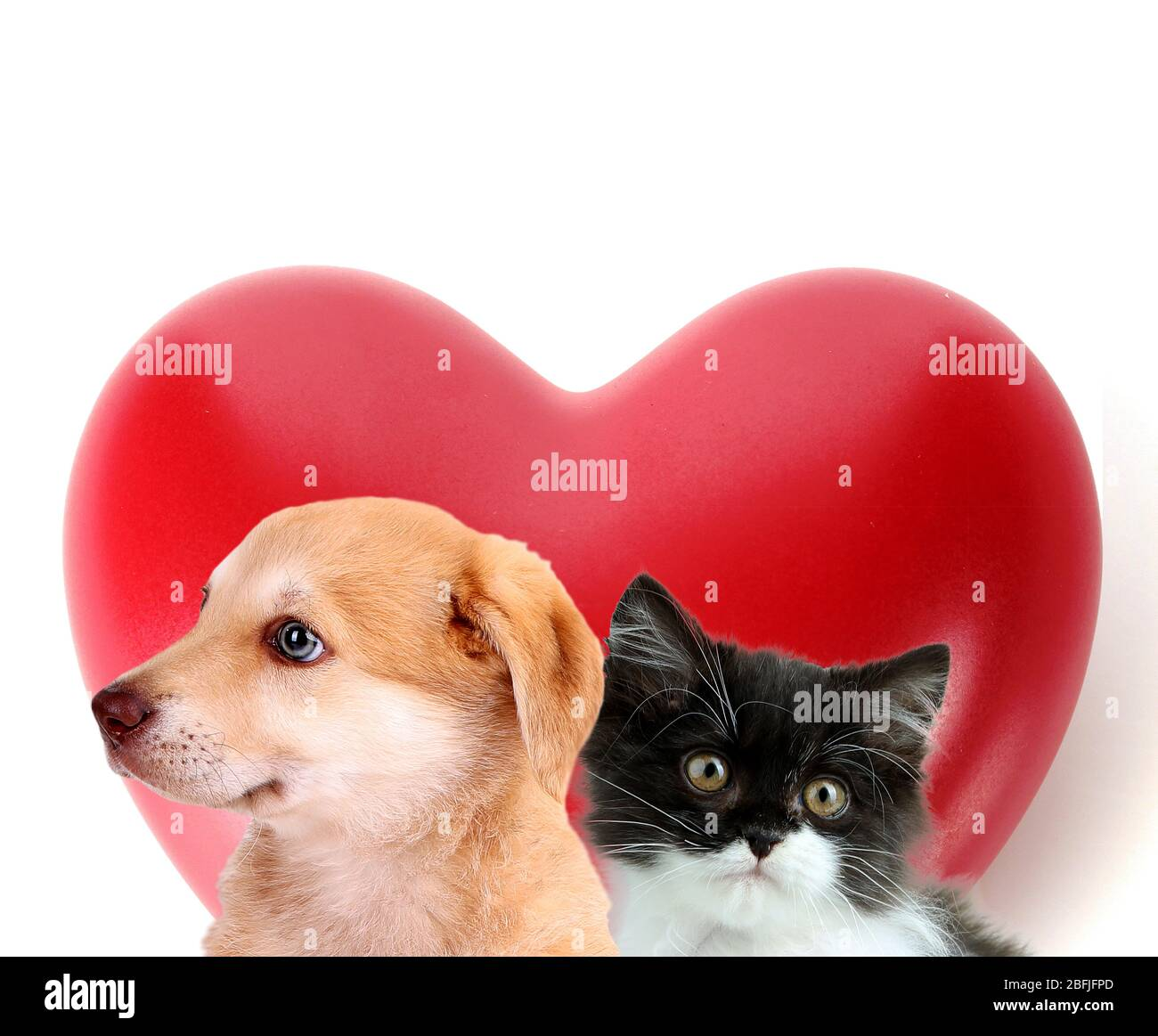 Cat and dog with red heart isolated on white Stock Photo