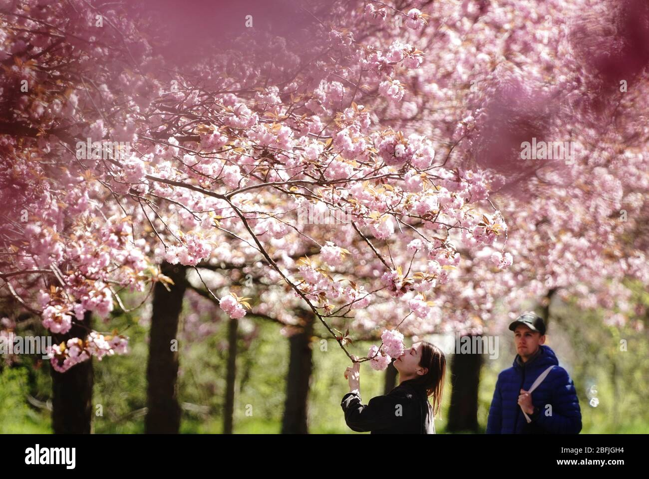 Teltow Germany 19th Apr 2020 Miriam Smells The Blossoms Of A