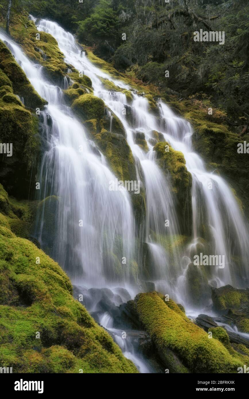 Upper Proxy Falls pours over moss covered columnar basalt in Oregon's Three Sisters Wilderness and Lane County. Stock Photo