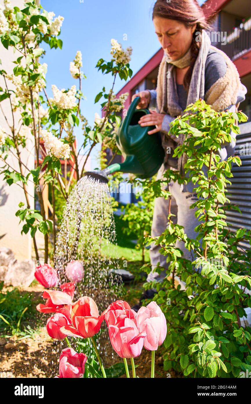Pfaffenhofen a.d.Ilm, Germany, April 20, 2020. Woman with watering can watering flowers and plants on April 20, 2020 in Pfaffenhofen a.d.Ilm, Bavaria, Germany. Model released © Peter Schatz / Alamy Live News Stock Photo