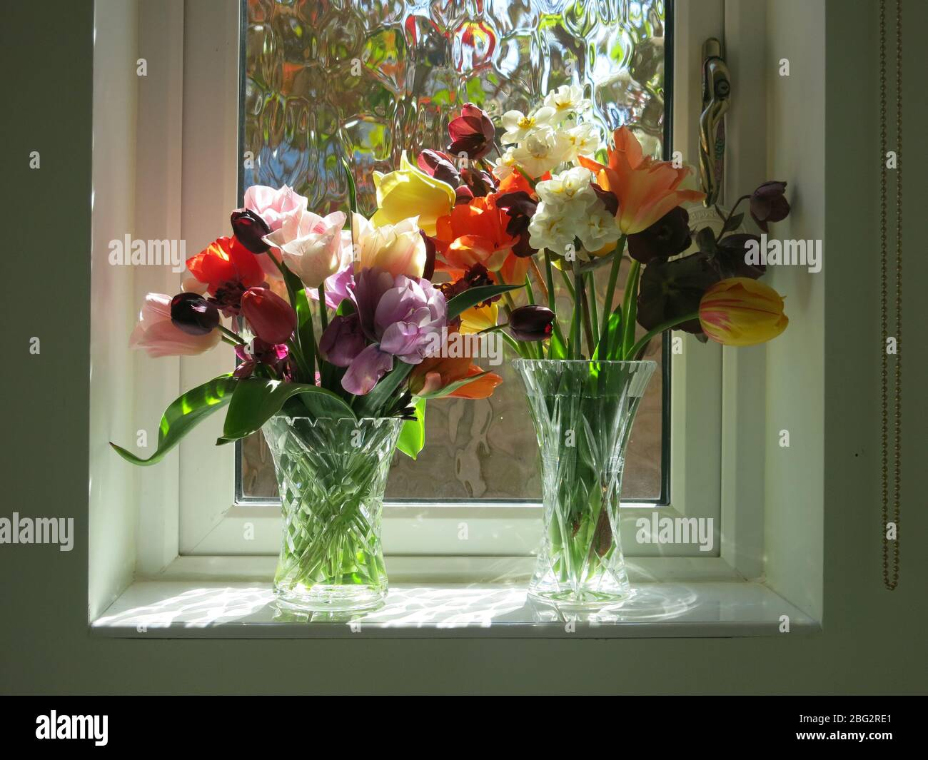 Two Glass Vases On A Sunny Bathroom Windowsill Are Filled With Spring Tulips And Provide A Cheery Colourful Flower Arrangement Stock Photo Alamy