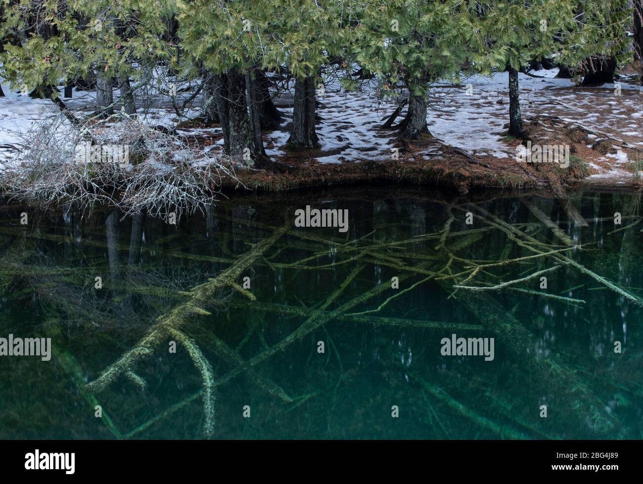Roots and Fallen Trees in Clear Blue Water of an Underground Spring Stock Photo