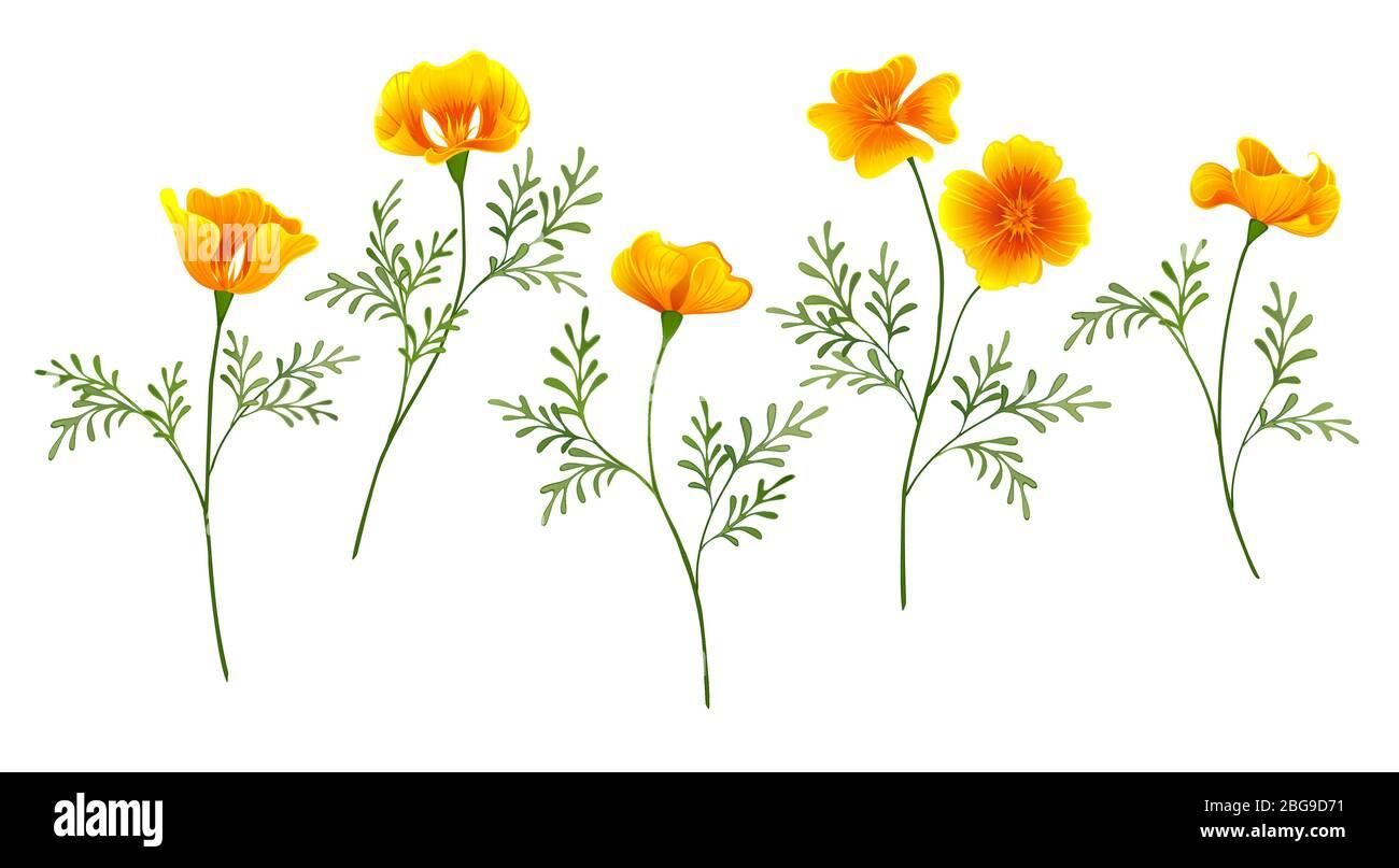 Set of yellow golden flowers California Poppy on white isolated background. Stock Vector
