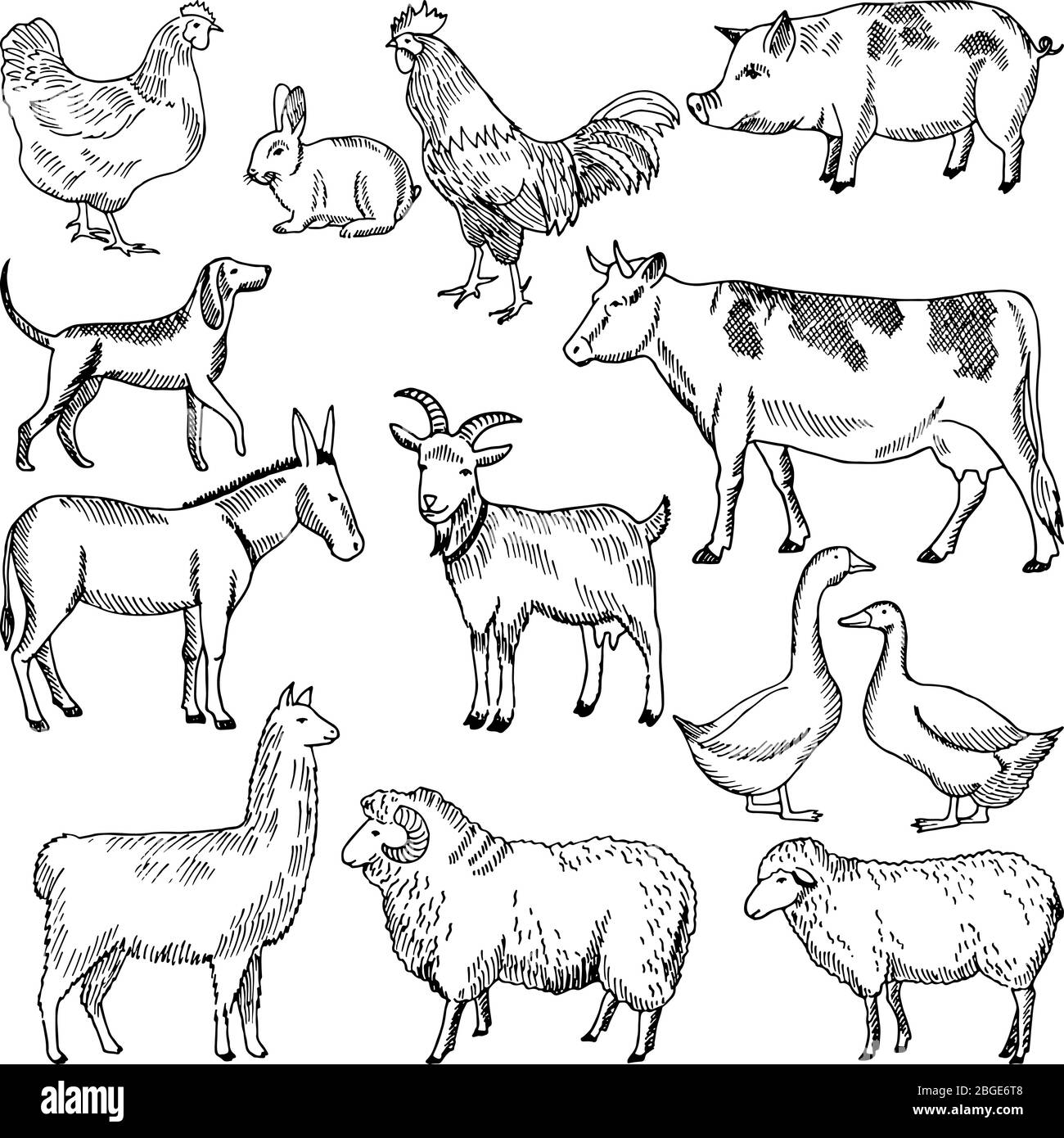 Vintage farm animals. Farming illustration in hand drawn style Stock Vector