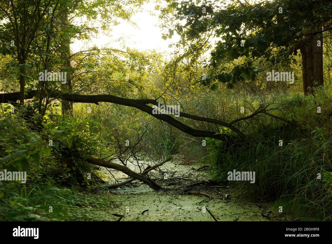 sumpfiger Wassergraben im LSG Buch Stock Photo