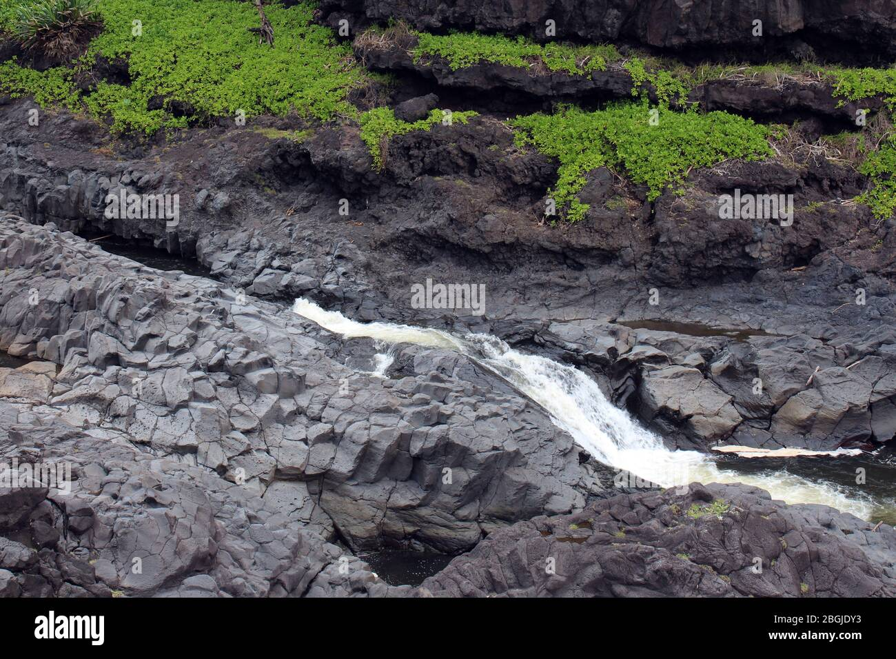 A section of Palikea Stream, Oheo Gulch, Seven Sacred Pools, running through volcani rock with Scaevola taccada plants growing in the rock, Maui, Hawa Stock Photo