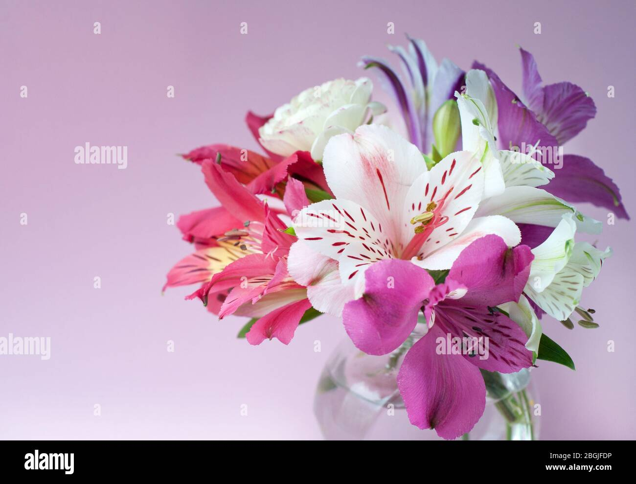 Beautiful Colorful Alstroemeria Flowers In Full Bloom With Green Leaves Peruvian Lily Bouquet Of Flowers On Pink Background Stock Photo Alamy