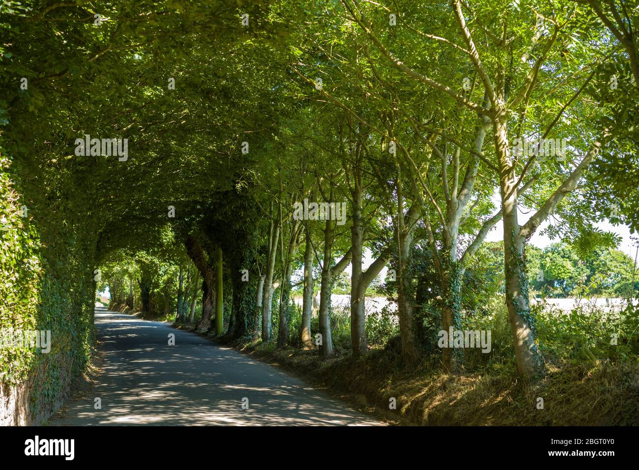 Mysterious tree covered lane by Rozel in St Martin region of Jersey, Channel Isles Stock Photo