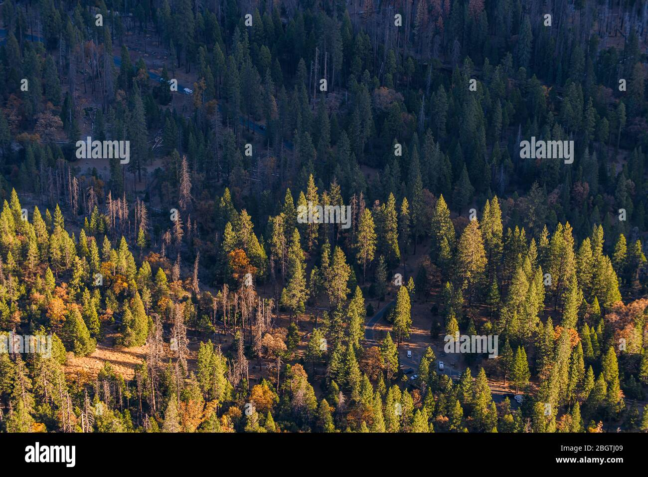 View of Yosemite Valley forest from top sunrise gold light Stock Photo