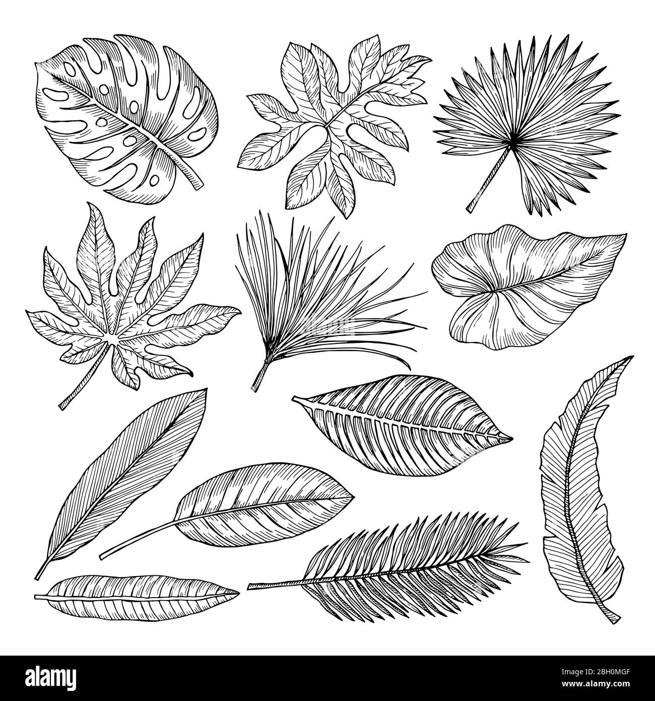 Tropical Leaves And Plants Vector Hand Drawing Pictures Isolate Illustration Of Tropical Leaf Palm Stock Vector Image Art Alamy Techniques you can apply to any botanical illustration! https www alamy com tropical leaves and plants vector hand drawing pictures isolate illustration of tropical leaf palm image354672655 html