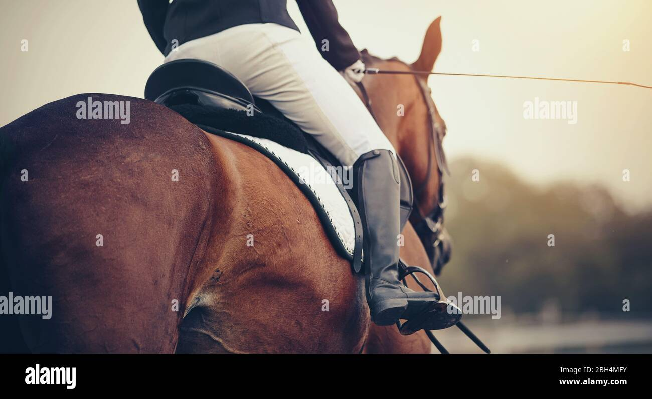 Equestrian Sport The Leg Of The Rider In The Stirrup Riding On A Red Horse Dressage Of Horses Stock Photo Alamy