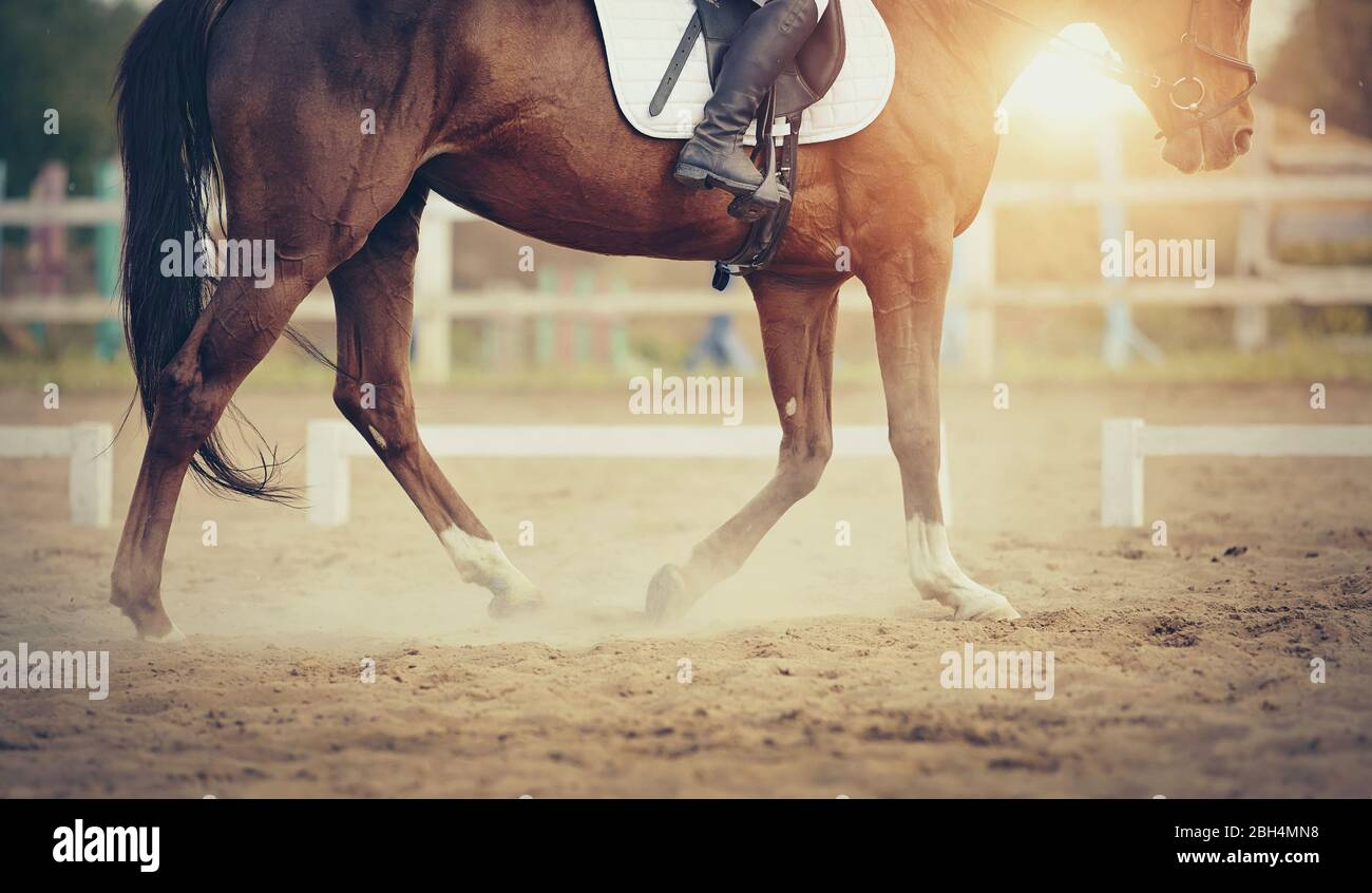 Equestrian Sport The Leg Of The Rider In The Stirrup Riding On A Red Horse Dressage Of Horses In The Arena Stock Photo Alamy