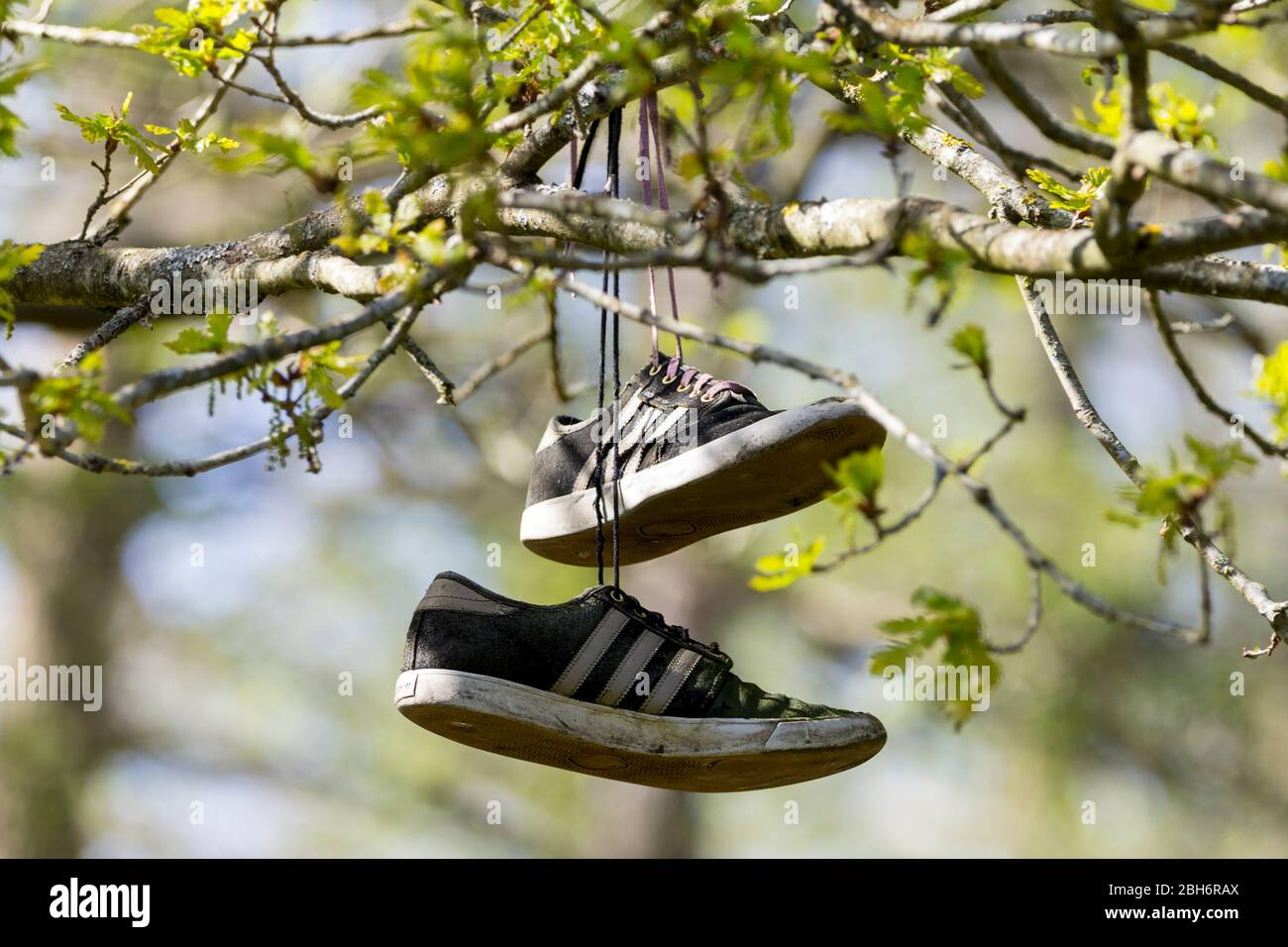 Plimsoll style trainers black and white