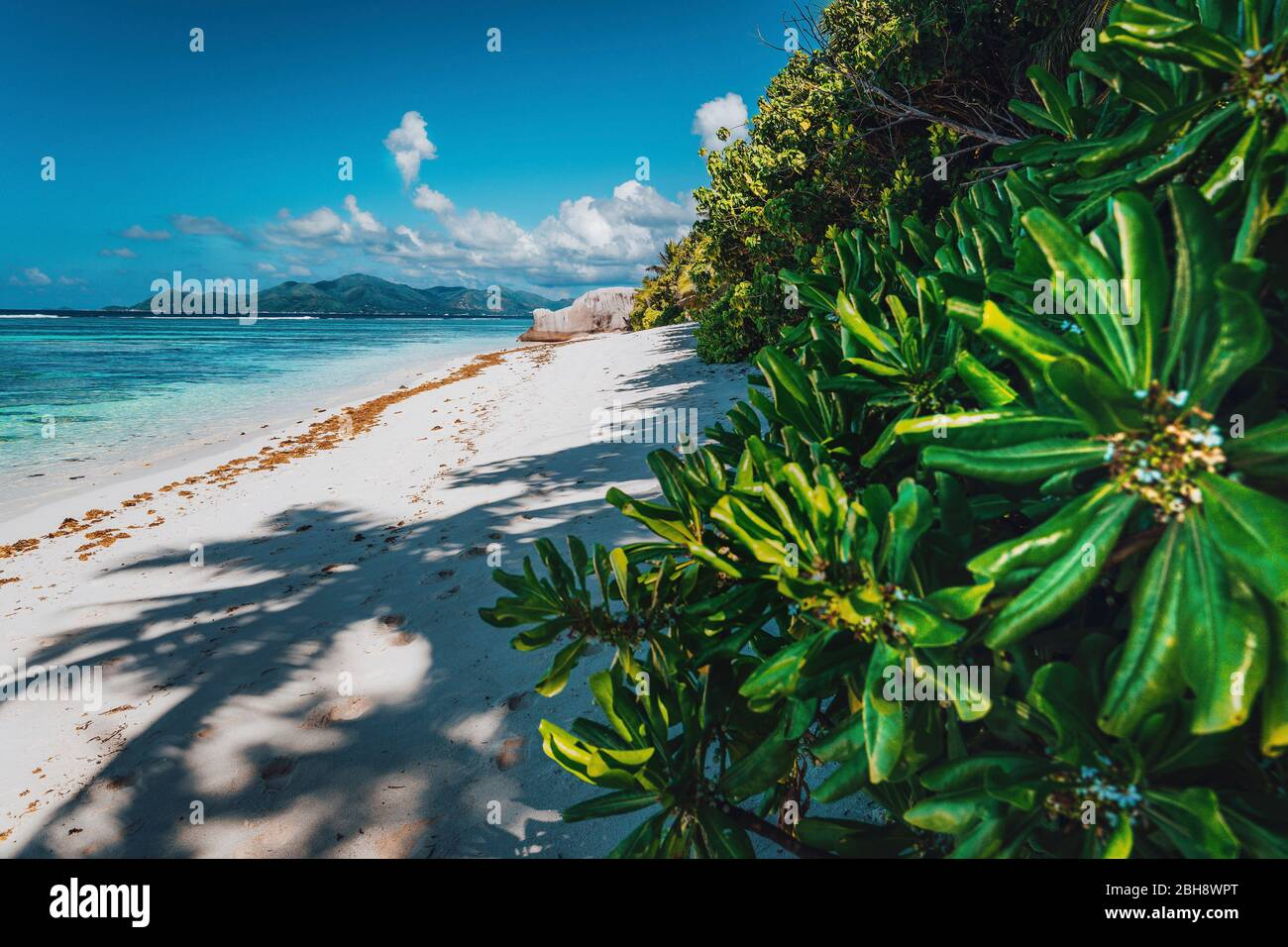 Tropical plants at famous Anse Source d'Argent beach on island La Digue in Seychelles. Exotic paradise travel scenery concept shot. Stock Photo