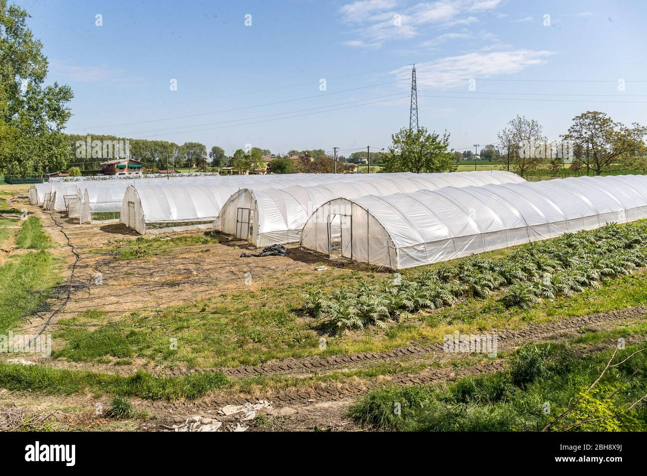 """Ferrara, Italy. 22 April, 2020.  Greenhouses with fruits and vegetables in the """"Casa di Stefano"""" (House of Stefano) recovery community in Ferrara, Ita Stock Photo"""