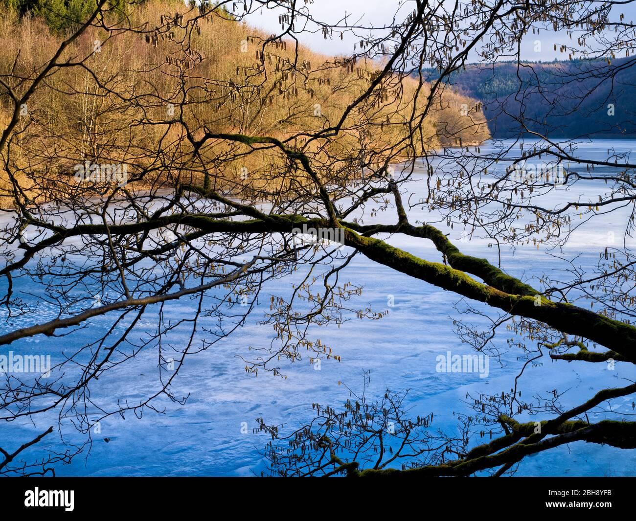 Europa, Deutschland, Hessen, Vöhl, Nationalpark Kellerwald-Edersee, Winterstimmung, Haselnussbaum am Ufer der Wooghölle Stock Photo