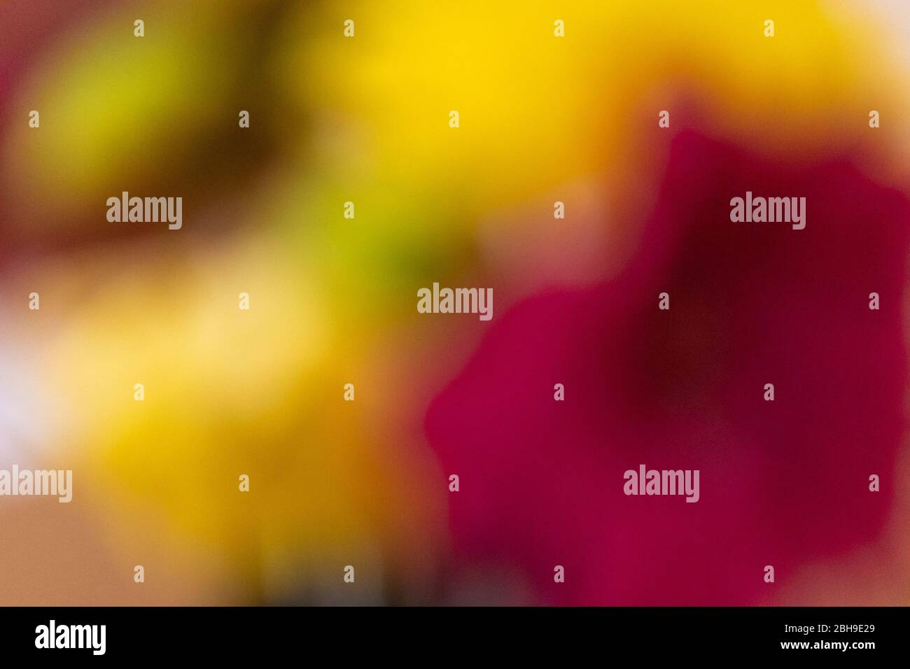 An abstract shot of flowers showing bright and vibrant colours Stock Photo