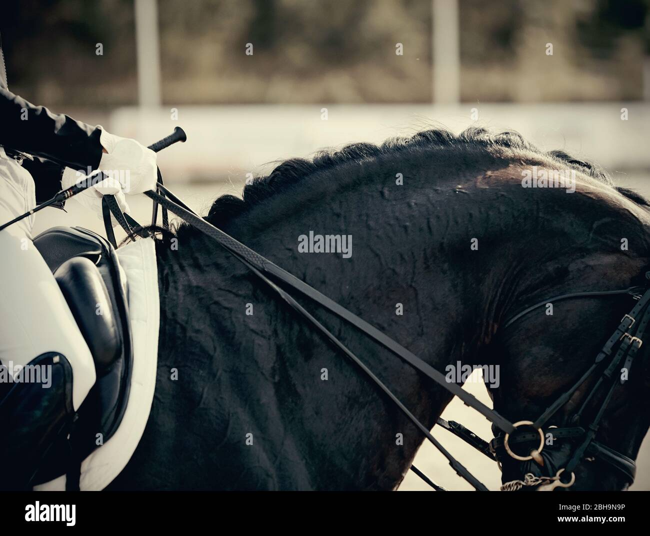 Neck Sports Black Horse In The Double Bridle Dressage Of Horses Equestrian Sport Stock Photo Alamy