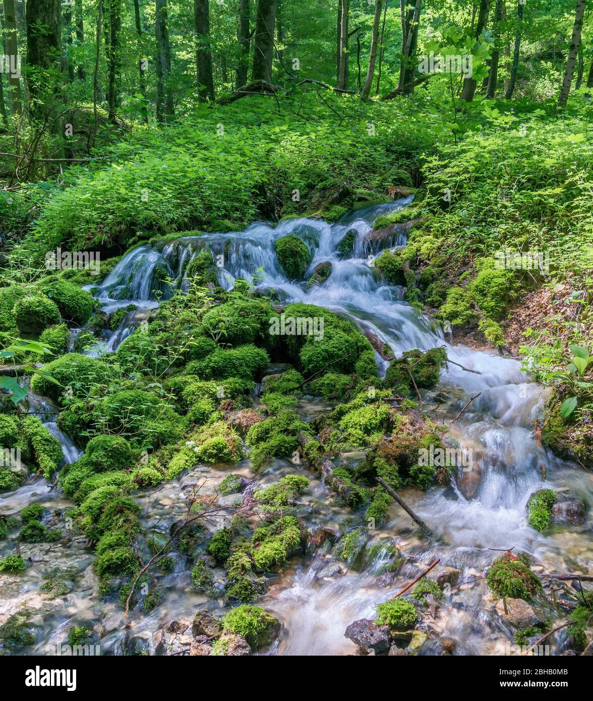 Germany, Baden-Württemberg, Lenningen-Gutenberg, source of water in the Bannwald Donntal near Gutenberg in the biosphere reserve Swabian Alb. The Bannwald belongs to the core zone Donntal and is located in the nature reserve Oberes Lenninger Tal. Stock Photo