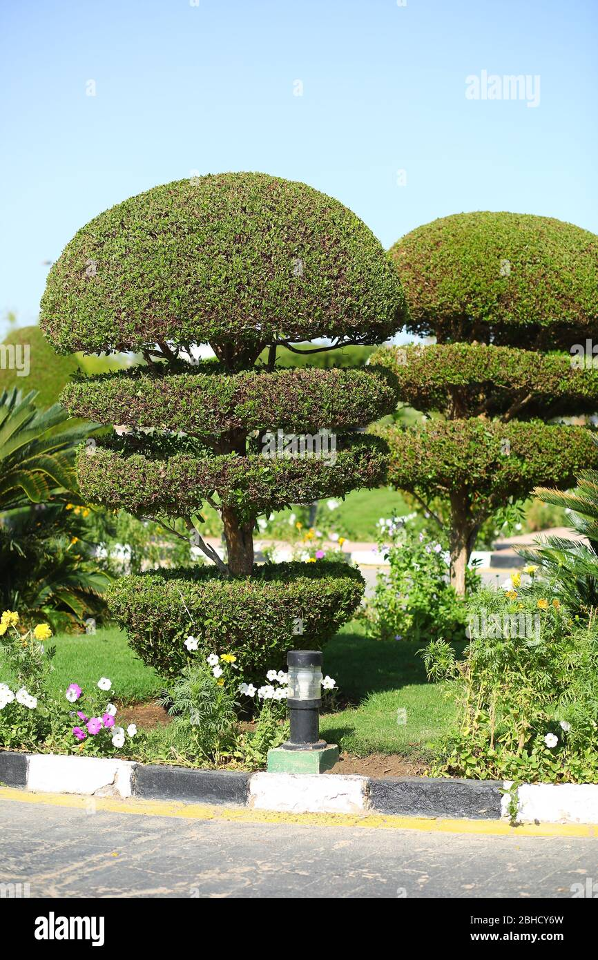 Topiary Design High Resolution Stock Photography And Images Alamy