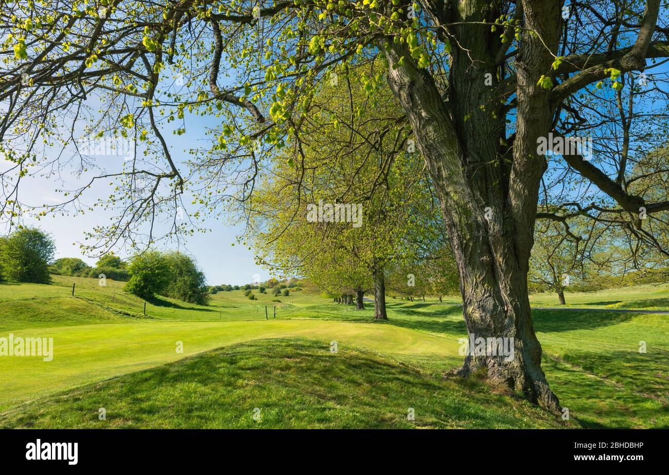 Golf Course Uk No People High Resolution Stock Photography And Images Alamy
