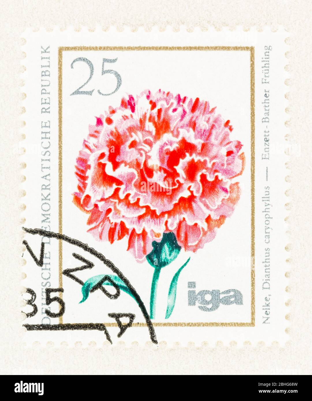 SEATTLE WASHINGTON - April 25, 2020: 1975 East Germany postage stamp featuring pink carnation in bloom. Scott # 1673 Stock Photo