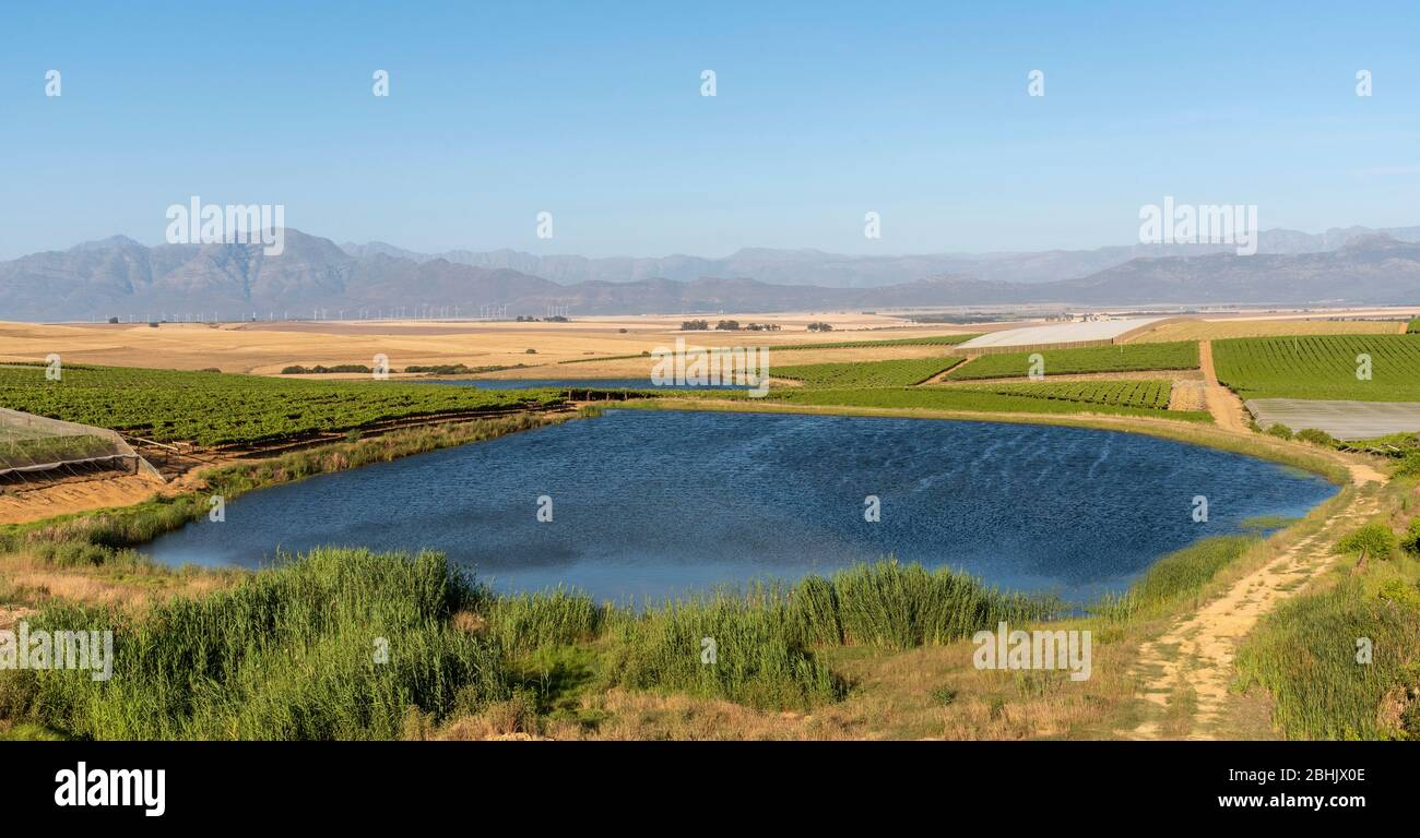 Riebeek Kasteel, Swartland, South Africa. 2019. Overview of the vineyards and wheat producing farms looking towards Gouda in the Swartland region. Stock Photo