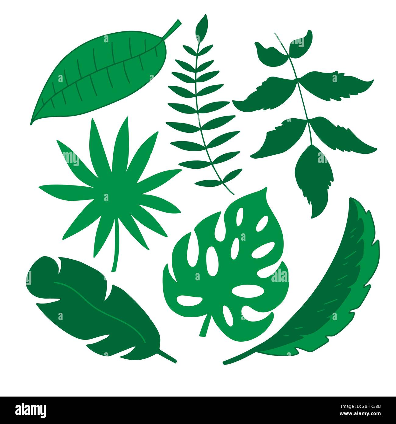 Set Of Tropical Leaves On A White Background In Vector Graphics For The Design Of Postcards Prints Banners Wallpapers Notebook Covers Stock Vector Image Art Alamy Lined notebook 40 leaves size:a5. https www alamy com set of tropical leaves on a white background in vector graphics for the design of postcards prints banners wallpapers notebook covers image355076187 html