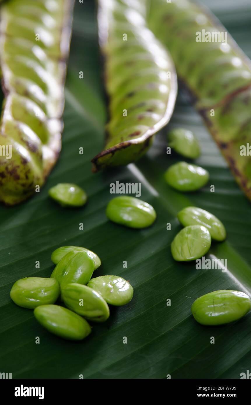 5 Stink Bean PARKIA SPECIOSA Petai  Bitter Beans Sataw สะตอ Seeds Organic