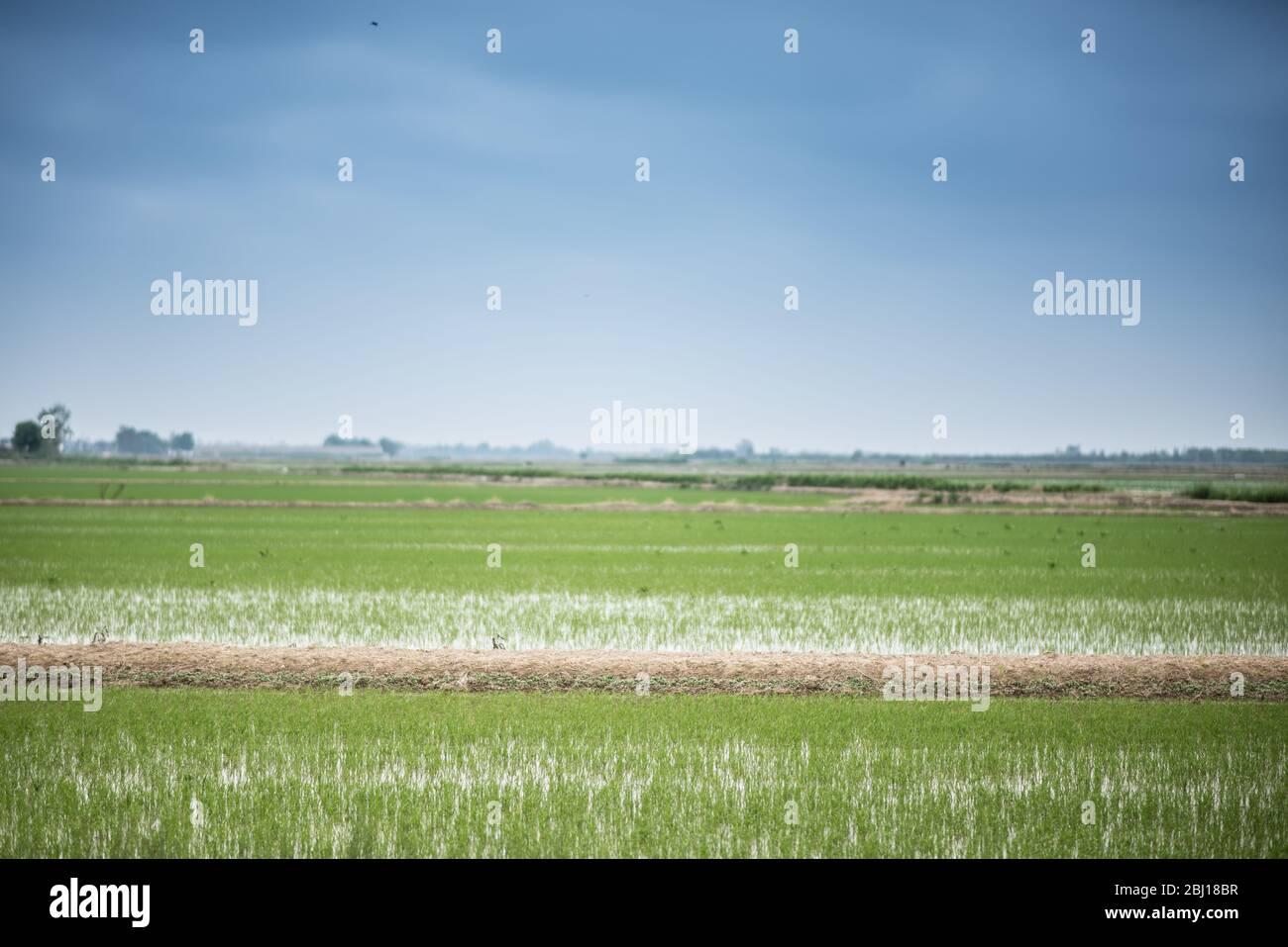 Delta de l'Ebre Stock Photo