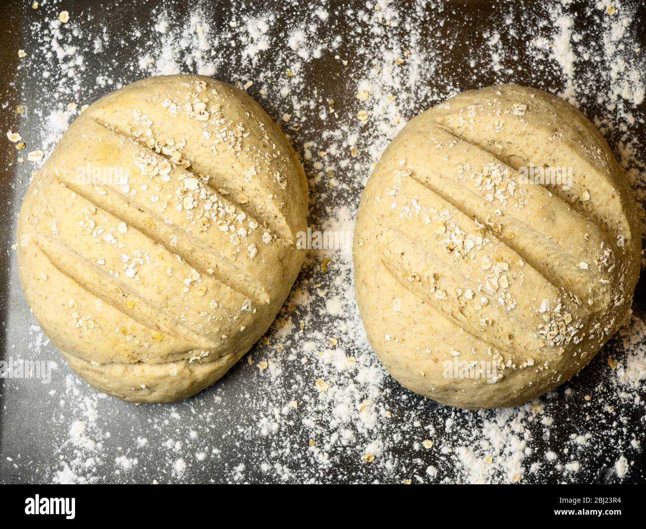 Two proved oat bread loaves ready for baking on a floured baking sheet Stock Photo