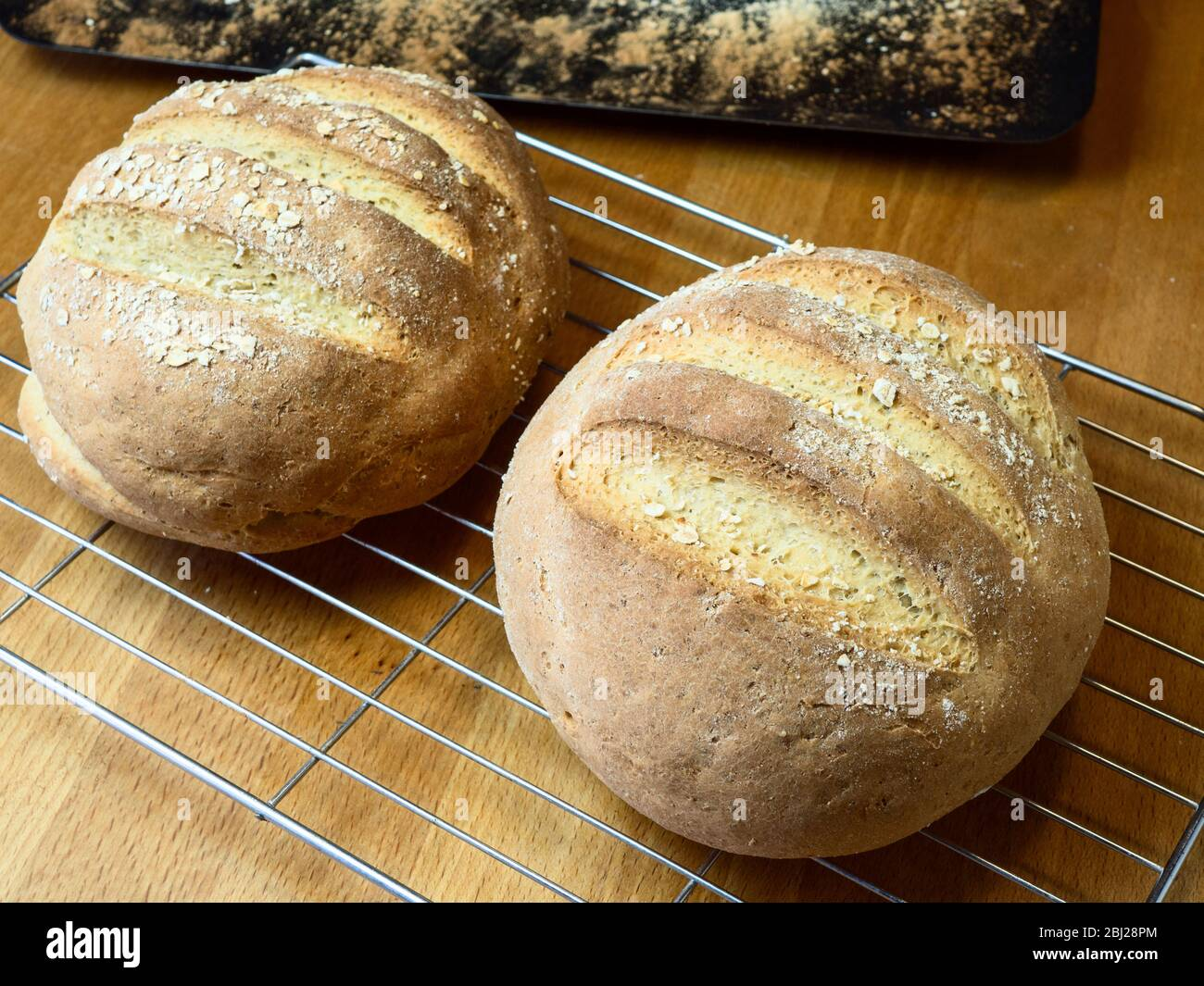 Freshly baked loaves of oat bread made with white bread flour and oat flour topped with rolled oats on a wire cooling rack Stock Photo