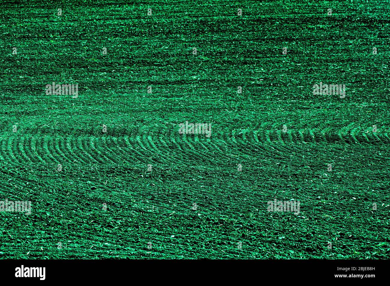 Green lines abstract background texture in petrol or teal Stock Photo