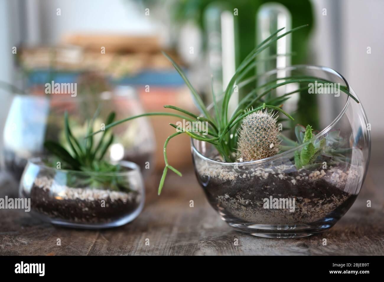 Mini Succulent Garden In Glass Terrarium On Wooden Table Stock Photo Alamy