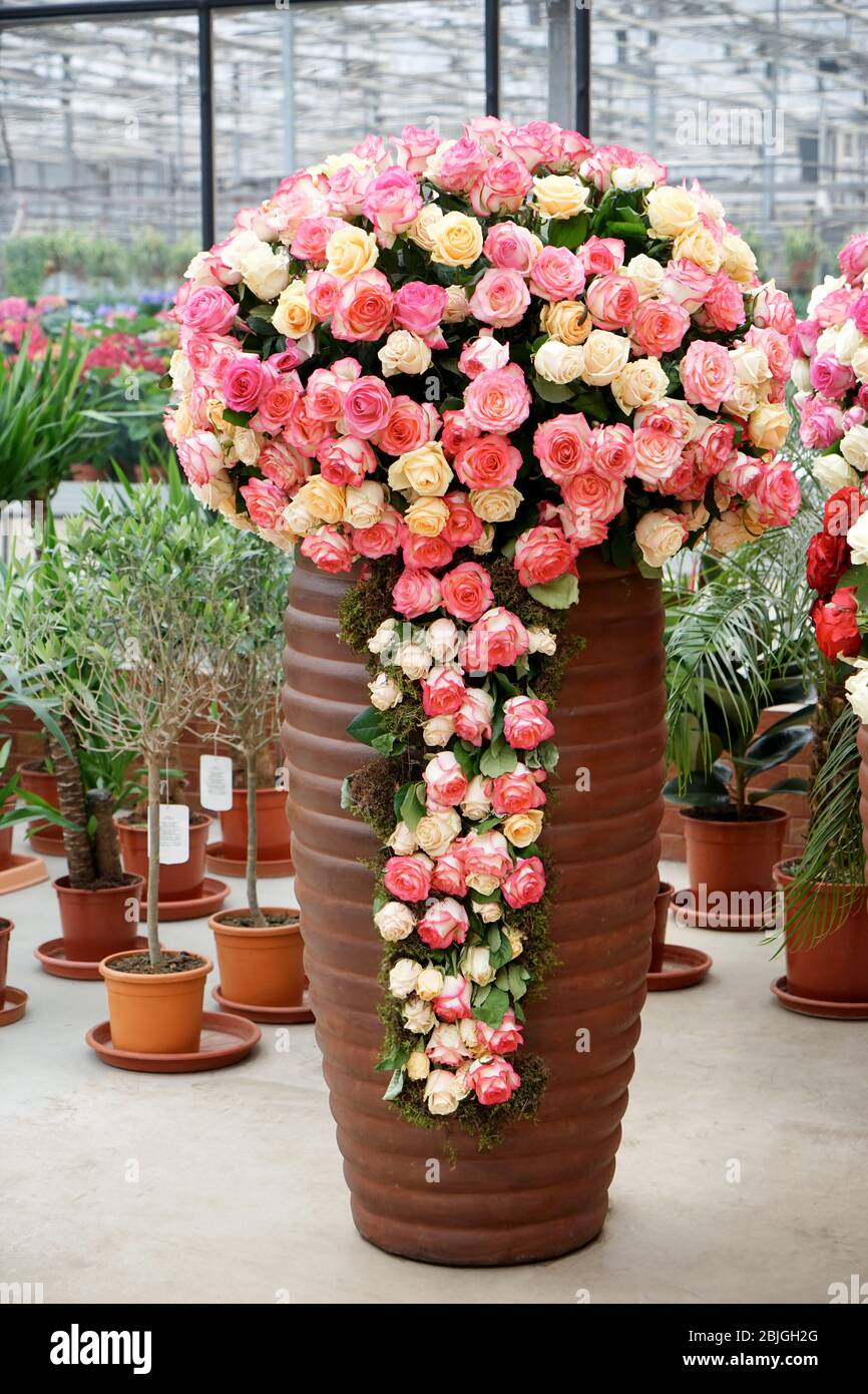 Big Vase With Beautiful Roses In Flower Shop Stock Photo Alamy